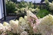 ogród_26