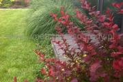 ogród_47