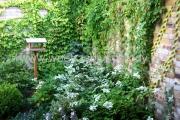 ogród_6
