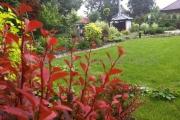 ogród_67