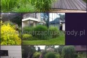 ogród_78