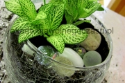 dekoracje roślin IMG_9288
