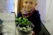 komozycja roślin w szkle