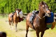 eventy konie