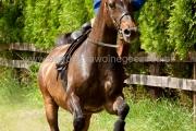 pokaz jazdy konnej