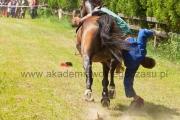 pokaz konie
