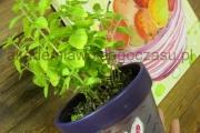 dekoracja doniczki z ziołami