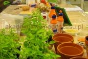 sadzenie ziół